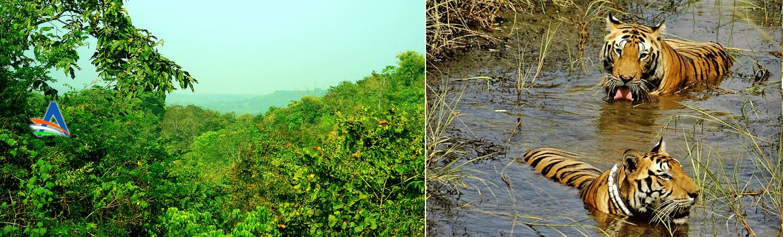 Admire the wonders of the nature in the Eturnagaram Wildlife Sanctuary