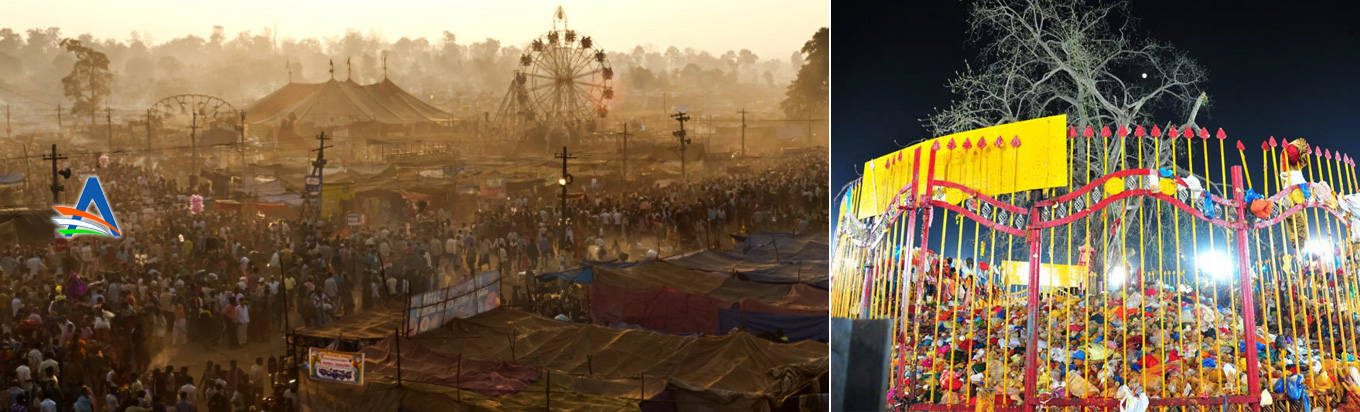 Enjoy the tribal festival of Medaram Jatara and get a glimpse of the ancient India