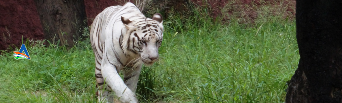 Get up and close with nature at the Nehru Zoological Park, Hyderabad