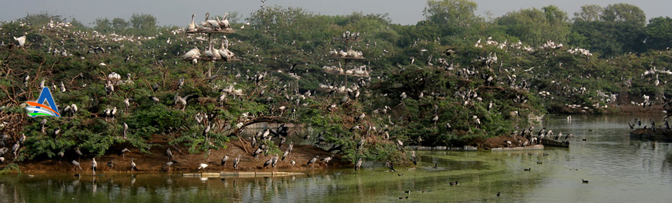 Uppalapadu Nature conservation a treat for the nature lovers and bird watchers