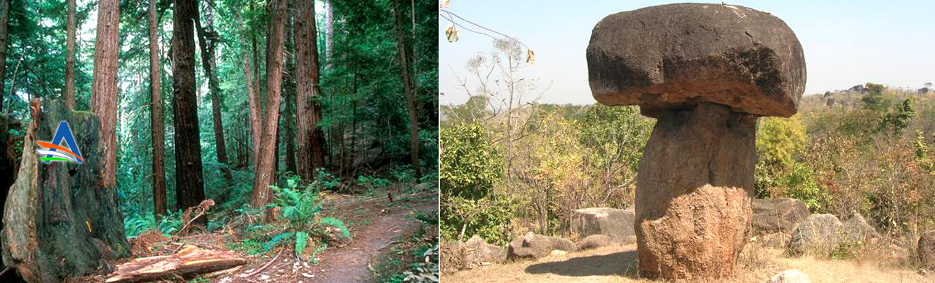 Witness the nature from close quarters at Mallaram forest