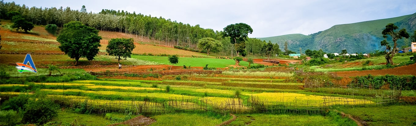 Get up close and personal with nature in Araku Valley