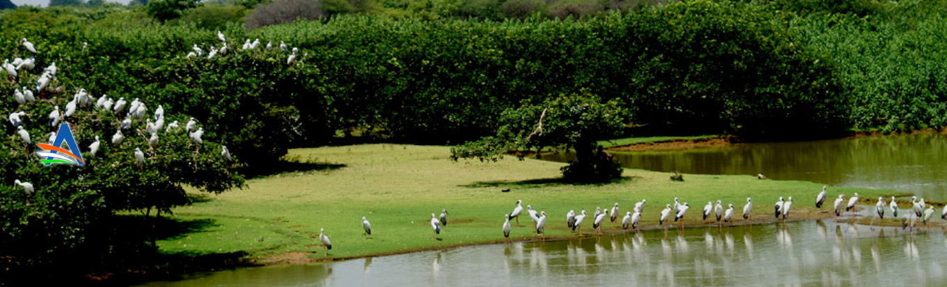 Nelapattu Bird Sanctuary: A treat for the Birdwatchers