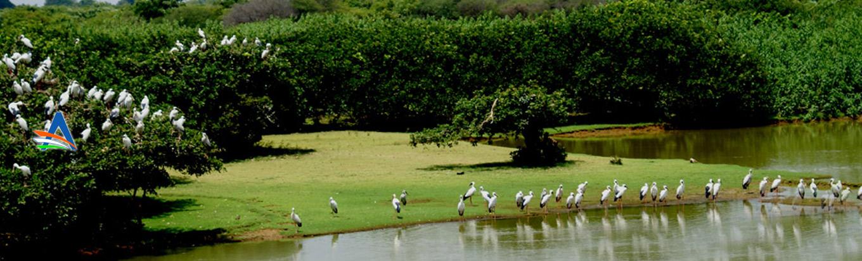 Nelapattu Bird Sanctuary: A treat for the Birdwatchers